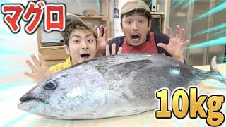 【巨大】10kgのマグロを兄弟で解体チャレンジ!!
