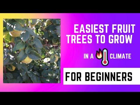 Easy to Grow Fruit Trees for Beginner Gardeners for AZ 9B