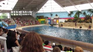 First dolphin show for the kids