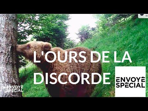 Envoyé spécial. L'ours de la discorde - 4 octobre 2018 (France 2)