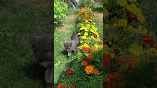 Кошка Сара и бархатцы