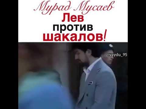 Мурад Мусаев -