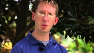 Care of Rosa Hibiscus : Gardening Tips