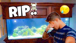 something-happened-to-the-fish-in-my-aquarium