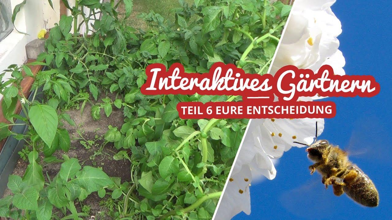 Interaktives Gärtnern Teil 6 | Eure Entscheidung Artikelbild
