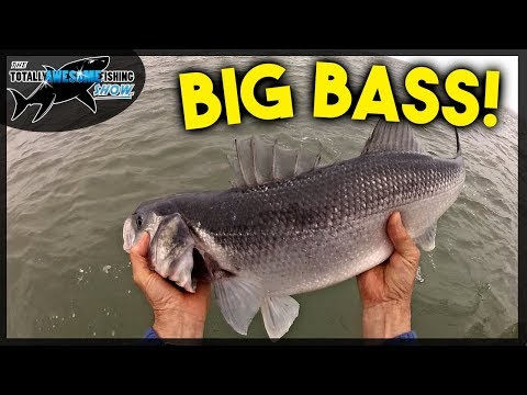 Huge Bass On Lures And Bait - An Epic Day Fishing