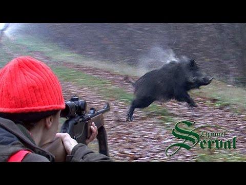 क्रोएशिया में जंगली सूअर शिकार - भाग 6, Kroatische Keiler 3 - Drückjagd, Shasse औ Sanglier