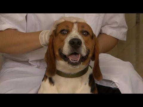 China Genetically Modifying Beagles