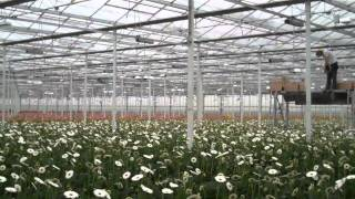 LG Flowers ALF600w-400v