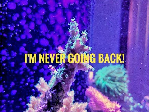 60G Reef: 46 Days No Mechanical Filtration! Im Never Going Back!