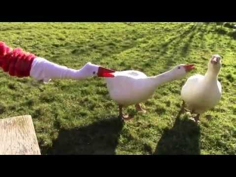 Comment faire une oie marionnette youtube - Comment faire une marionnette ...