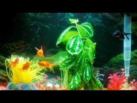 Does Your Fish Tank Need An Air Pump? | Aquarium Care