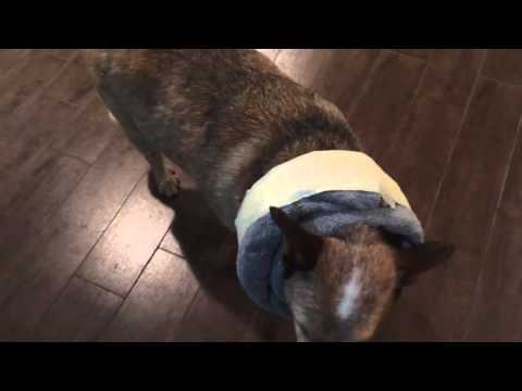diy-dog-cone-alternative-e-collar