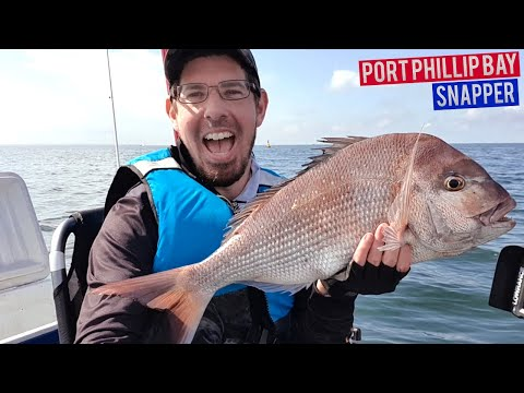 Port Phillip Bay Snapper Fishing On Soft Plastics By Kayak