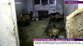Время новостей. В Воркуте начинают отлов бродячих собак. 25 февраля 2015