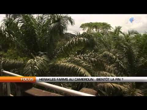 Herakles Farms au Cameroun : Bientôt la fin ?
