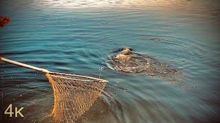 Сазан на макуху на мели в Ахтубе Рыбалка 2021