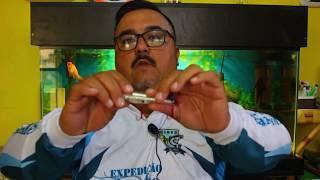 Shibud Fishing, Isca Z Top Marine Sports