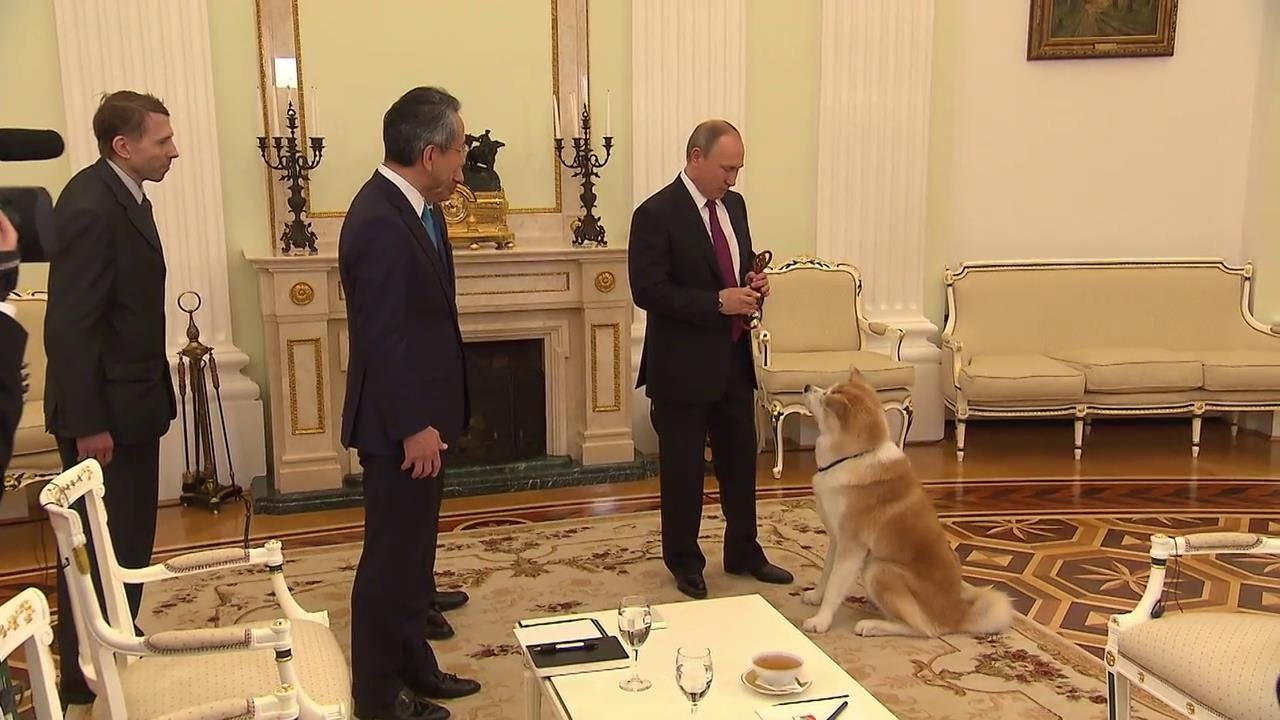 Putin Brings His Akita Breed Dog Yume Before Interview With Japanese Media Youtube