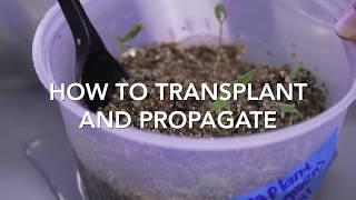 Transplanting & Propagation - the Aerospring Gardens way