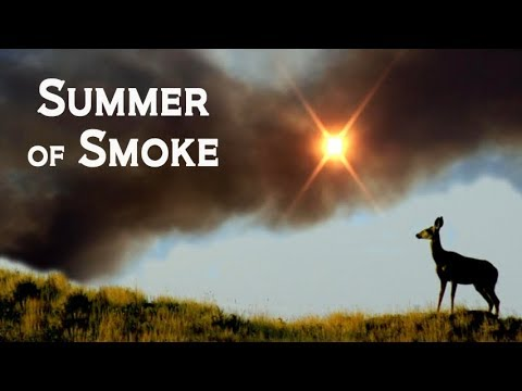 Summer of Smoke - Camping & BC Fires