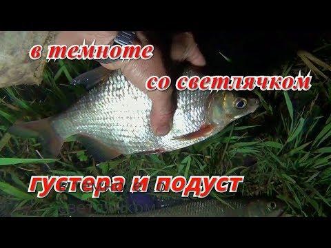 Ночная рыбалка со светлячком. Густера и подуст.