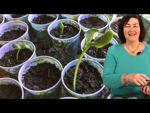 Starting Heirloom Seeds Indoors