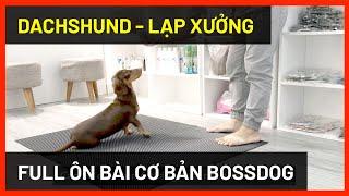 Full buổi ôn bài Dachṡhund (chó Lạp xưởng)   Cách huấn luyện chó cơ bản BossDog   Dog training