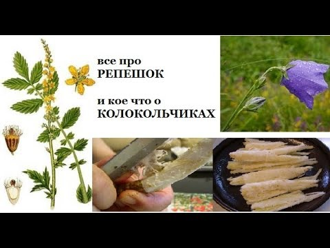 Магазин лекарственных трав, лечебные сборы, растения