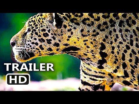 Play NOSSO PLANETA Teaser Brasileiro (2019) Documentário, Série Netflix