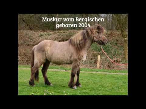 Muskur vom Bergischen Land