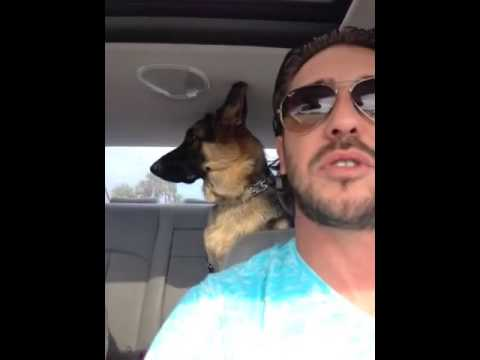John Legend-All of me (Cover by Lucius-German shepherd)