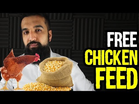 7 Free Chicken Feed Ideas | Save Money Profit More | Azad Chaiwala Show