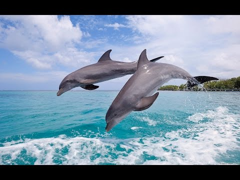 Pure Relaxation with DOLPHIN Fellows - 100 Minutes Reiki, Meditation, Yoga Music