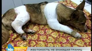 Необъяснимая жестокость: ангарчанин сбросил собаку с третьего этажа