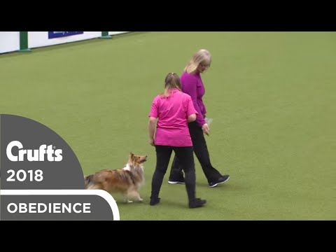 Inter-Regional Obedience - Reserve Class - Part 6 | Crufts 2018