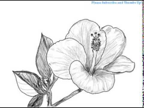 How to draw a hibiscus flower youtube how to draw a hibiscus flower ccuart Gallery