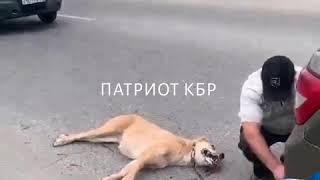 В Нальчике мужчина тащил по дороге привязанную к машине собаку