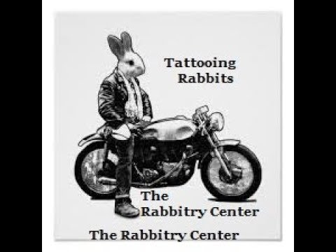 HOW WE TATTOO RABBITS & WHY