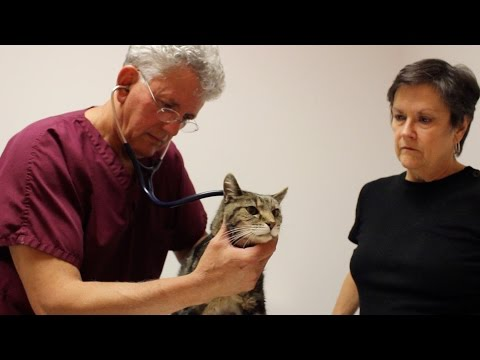 T4paws-Feline Hyperthyroidism Treatment