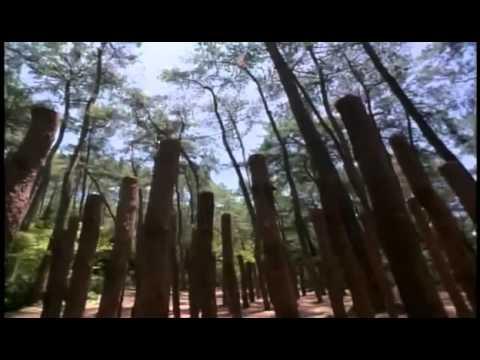 American Shaolin Movie in English