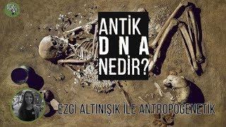 Antik Dna Nedir? | Ezgi Altınışık Ile Antropogenetik #1