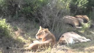 Kariega Big 5 Wildlife Volunteer Programme