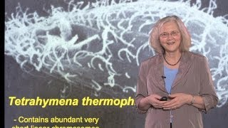Elizabeth Blackburn (UCSF): Discovery of Telomeric DNA and Telomerase