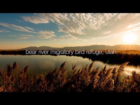 Bear River Migratory Bird Refuge