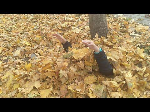 Осенние игры/Во что