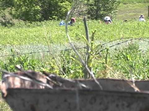 Digging up the Rez: Piikani Historical Archeology
