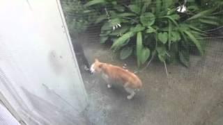 うるさい声がしたので外をみたら猫がいました。 よくみると睨んでいたの...