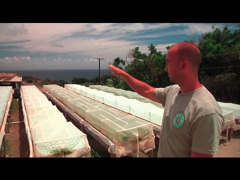 VOS1-11 Full Episode - Farming Fish