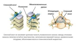 5. Нервная система спинной мозг (8 класс) биология, подготовка к ЕГЭ и ОГЭ